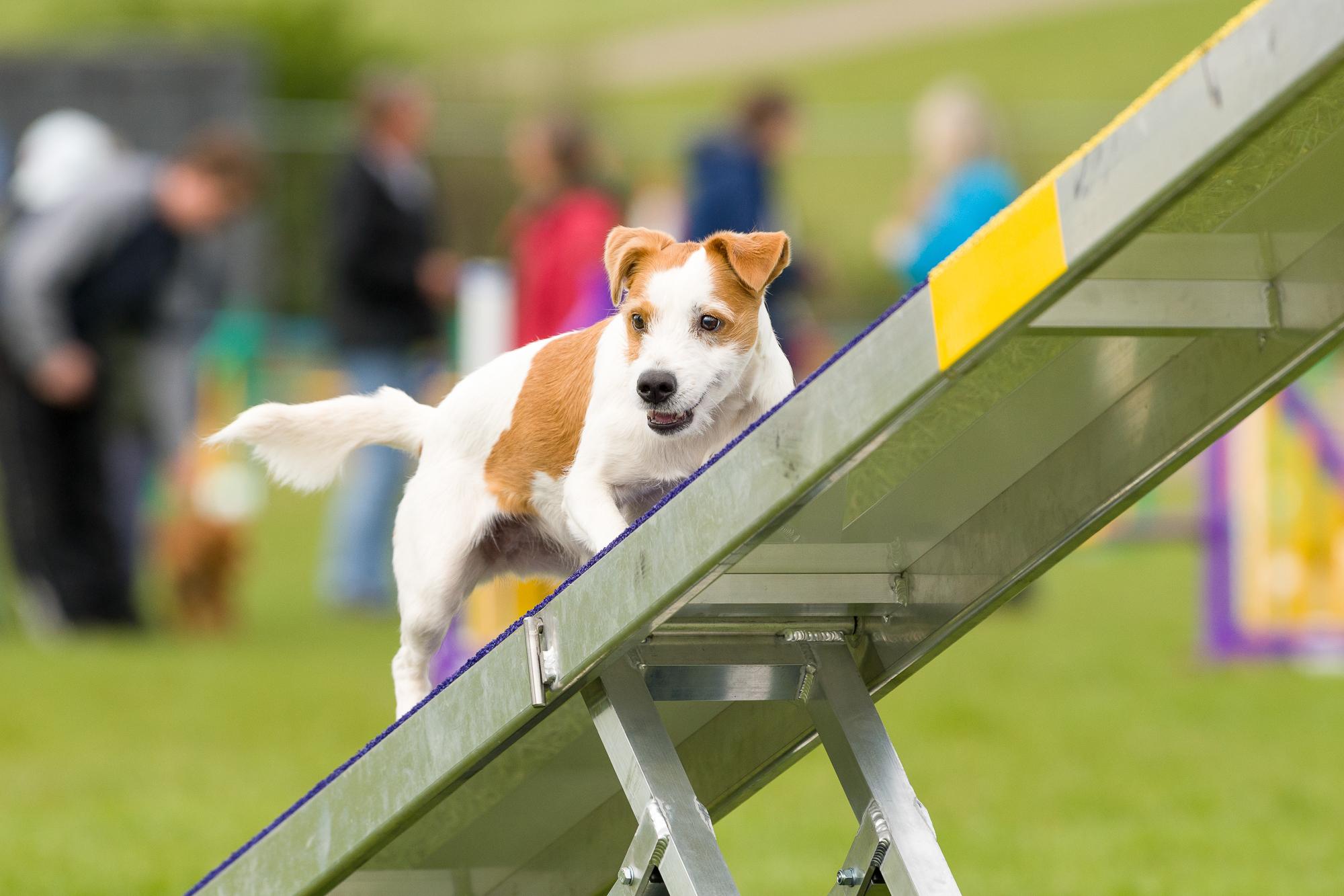 Dog Show Training Classes